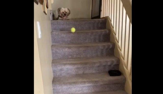 Вполне самодостаточная собака