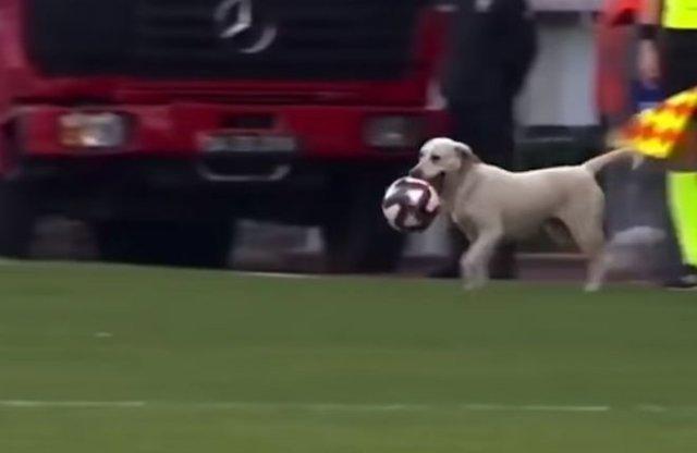 пес отобрал мяч у футболистов