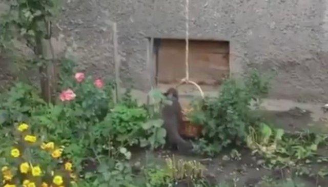 Самодельный лифт для кота