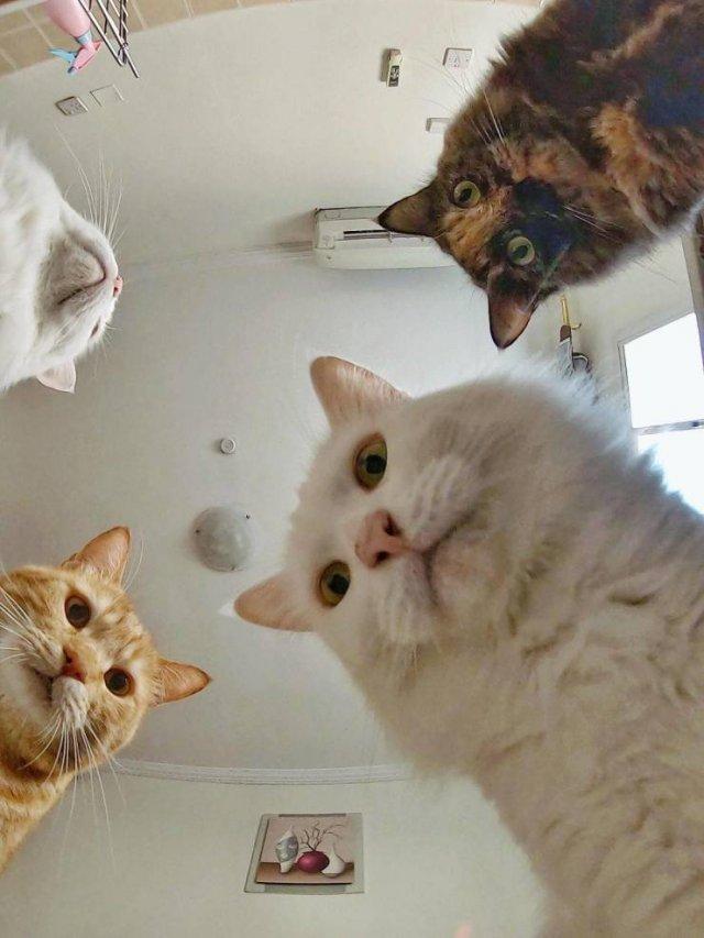 Коты смотрят в камеру