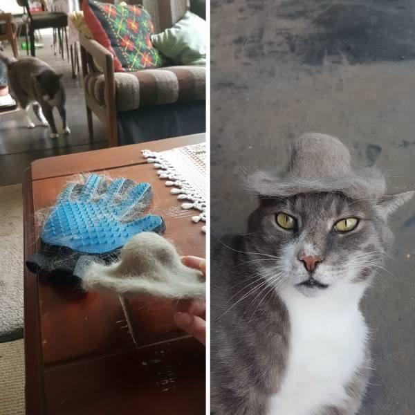 Кот в шляпе из шерсти