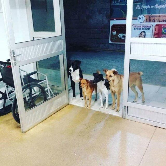 Собаки, которые поднимут вам настроение