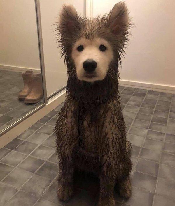 Пес в грязи