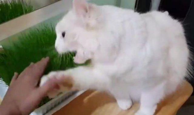 кот охраняет свое лакомство
