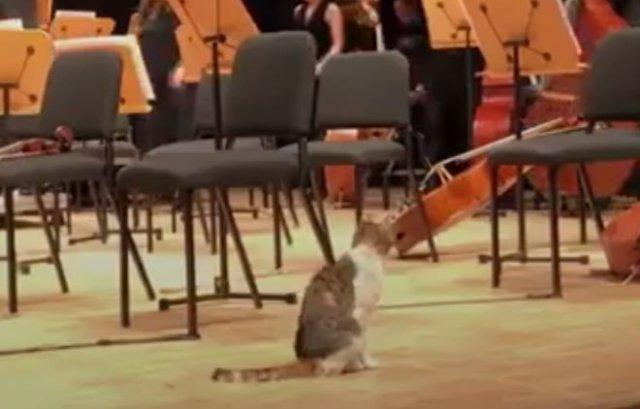 На концерте все внимание зрителей привлекла кошка, а не музыканты