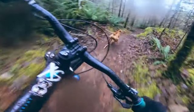 Захватывающая погоня маунтинбайкера за очень быстрым псом