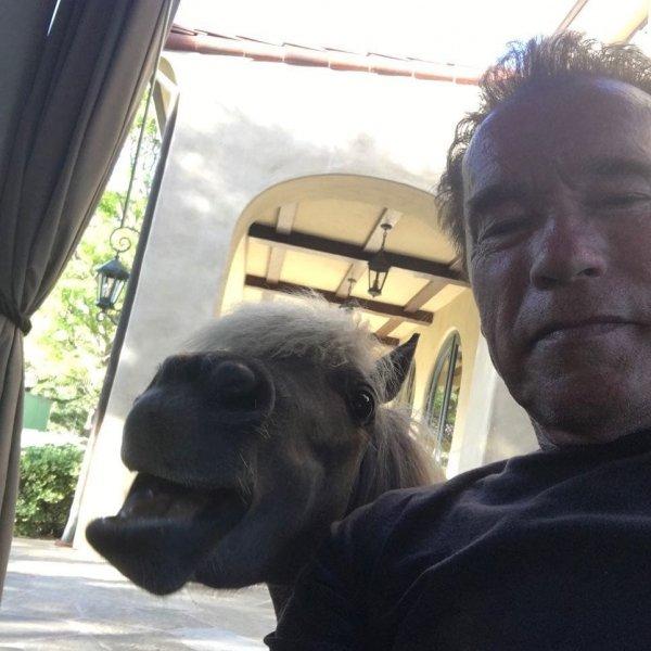 Арнольд Шварценнегер и пони