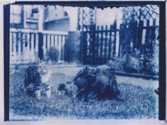 кот и собака на фотографии 1900 года