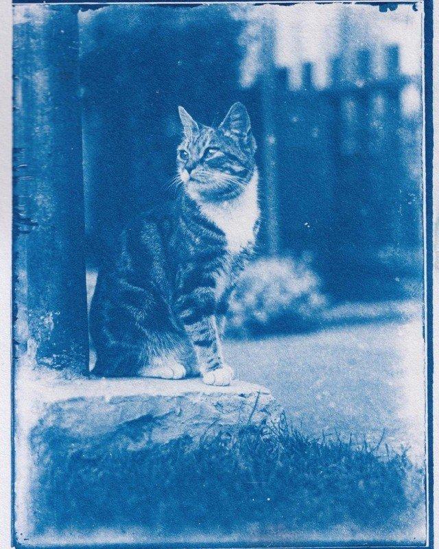 кот на фотографии 1900 года