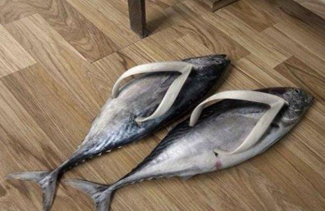 Рыбы тапки