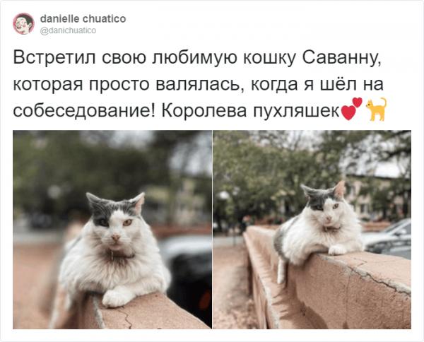 Рецензии на котов: забавный и странный тред в Твиттере