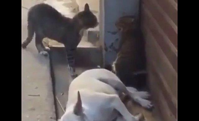 Внезапная драка котов чуть не довела пса до инфаркта