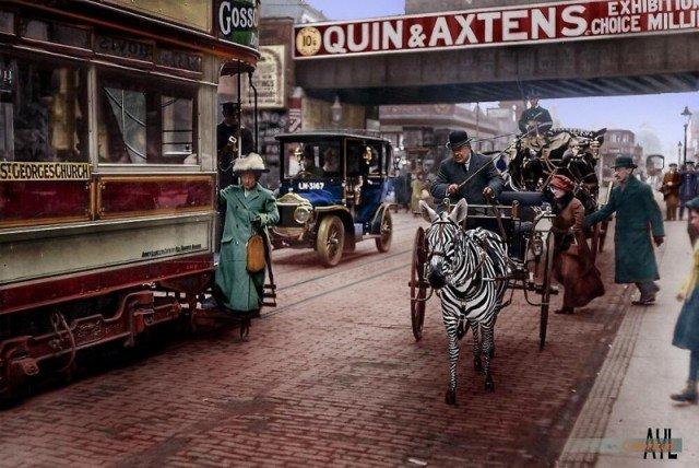 Зебра, запряженная в повозку в Лондоне, 1915 год