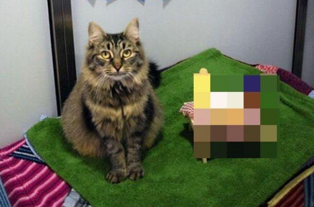 Сотрудники приюта устроили праздник одинокой кошке, к которой никто не пришел