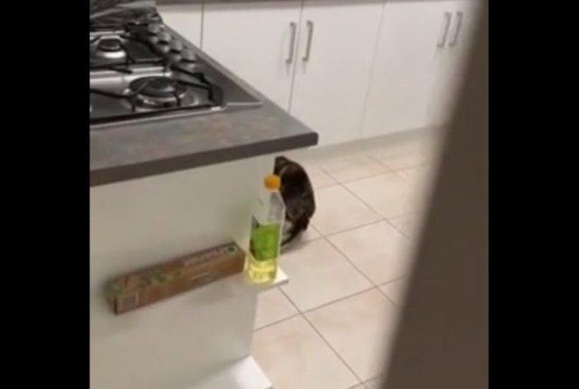 Как отучить кота залезать на стол