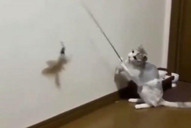 """Кот сам """"ловит"""" себе рыбу удочкой"""