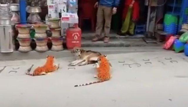 Собака против тигров