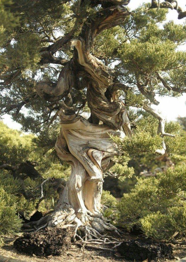 Крайне необычное дерево, которое начало расти странным образом