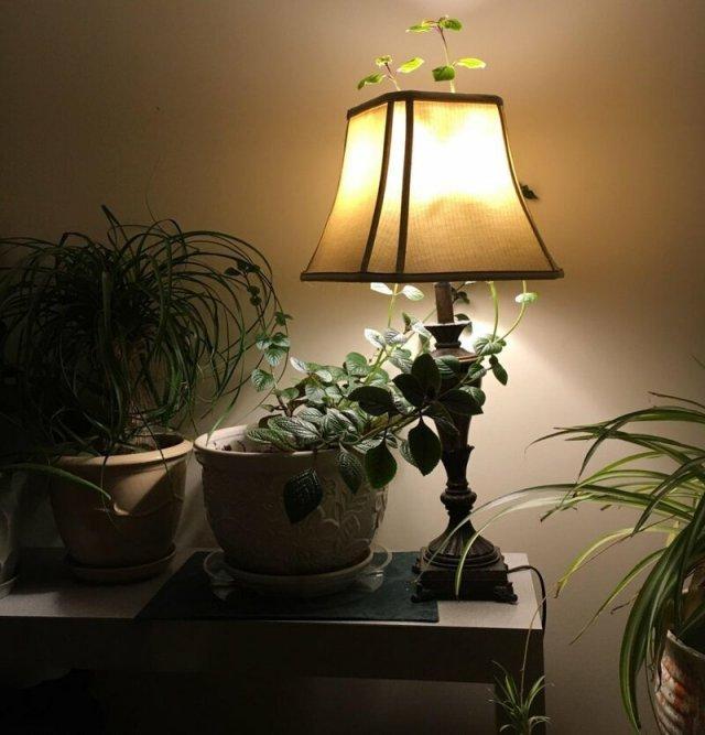 Растение проросло через лампу