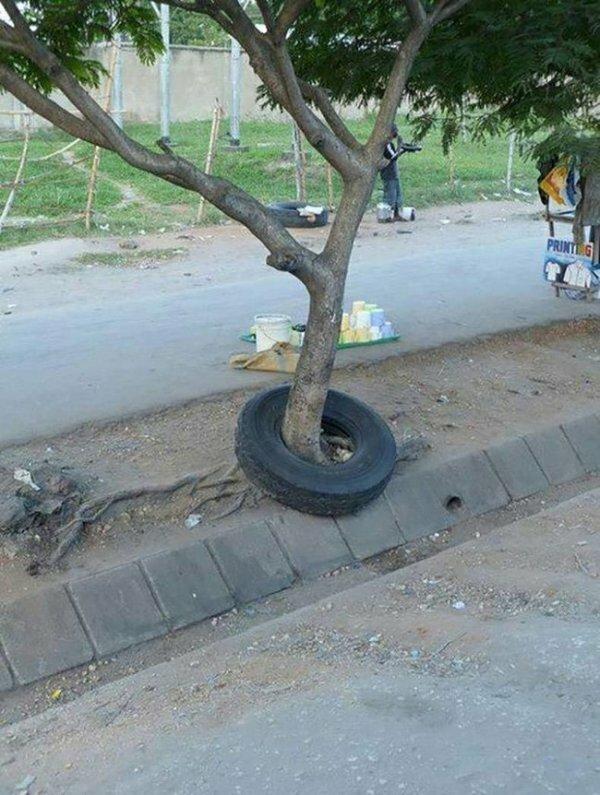 Дерево проросло через шину