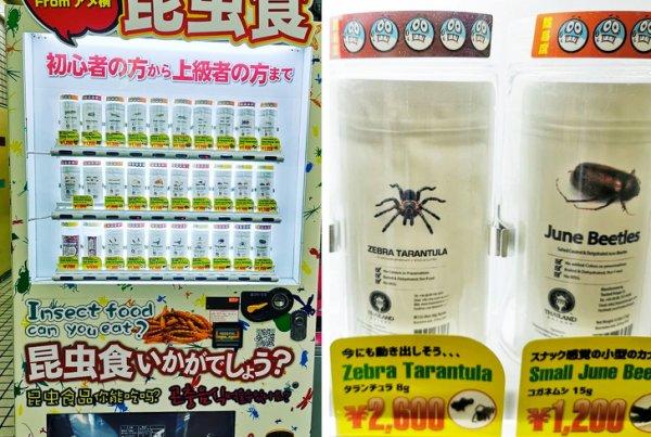 Еда из белка насекомых