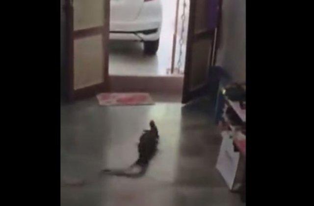 Изгнание танцующего ящера из дома