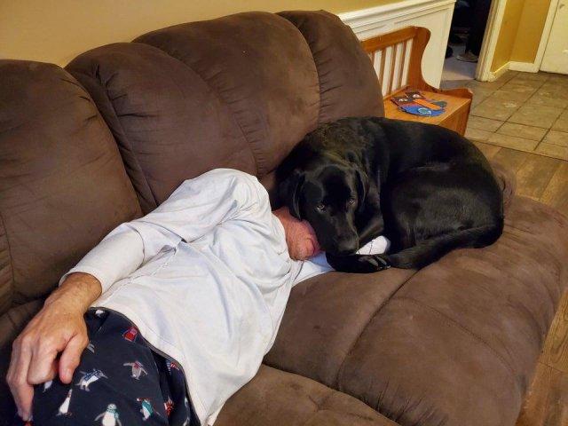 Отцы, которые были против собак в доме