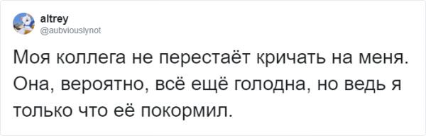 Тред в Твиттере: пользователи на карантине, описывают своих питомцев, будто это их коллеги