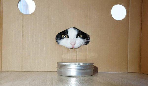 Эксперимент: коты - это жидкость