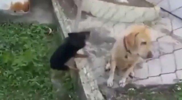 Очень агрессивный сосед