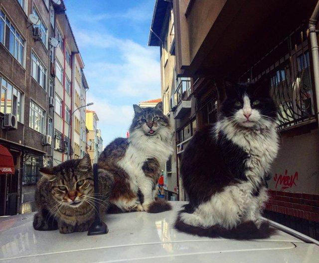 Коты на улицах Стамбула