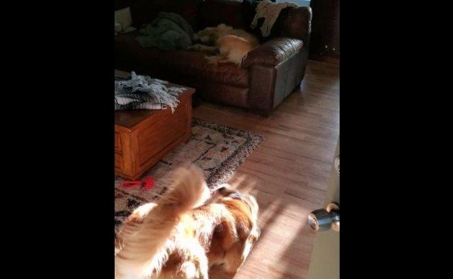 Вот так собаки радуются возвращению с прогулки