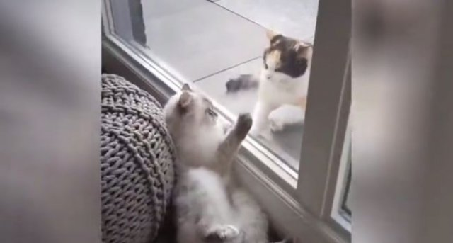 Коты изучают технику бесконтактного боя
