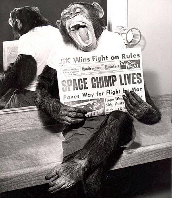 Шимпанзе позирует перед объективом камеры после успешного полета в космос