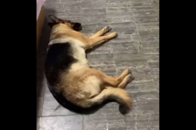 Пес, который узнает любимый звук из тысячи