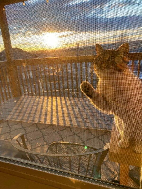 Котики тоже любят встречать рассвет