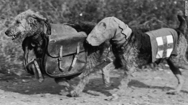 Собаки в противогазах во времена Первой Мировой войны