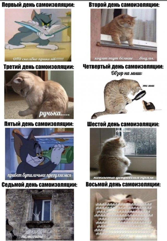 Мемы в Сети