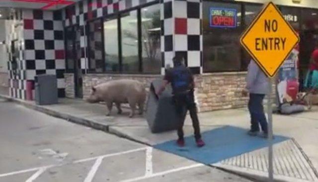 Свинья пришла в ресторан мстить за бекон