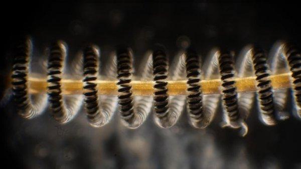Человеческий волос и нить из лампы накаливания