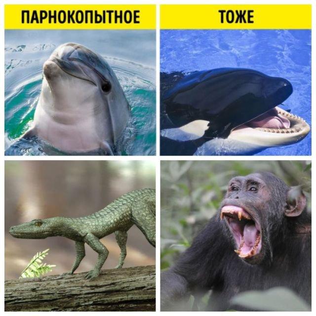 Подборка интересных фактов о животных, в которые трудно поверить (10 фото)