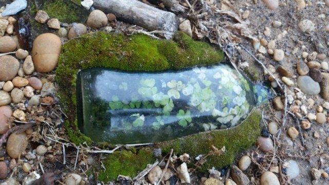 Бутылка, в которой пророс клевер