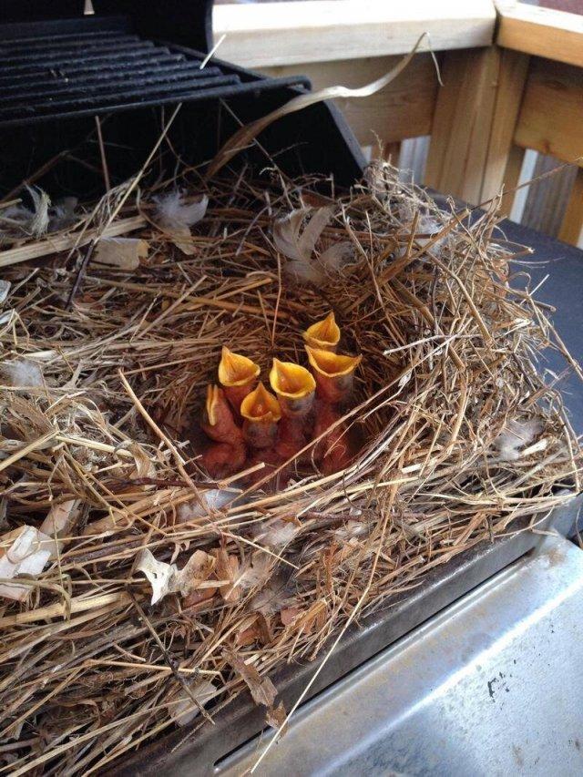 гнездо в гриле