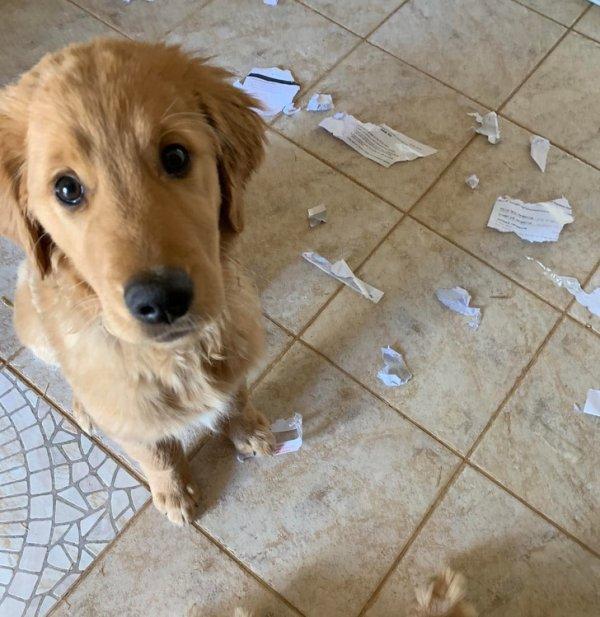 Собаки порвала бумаги