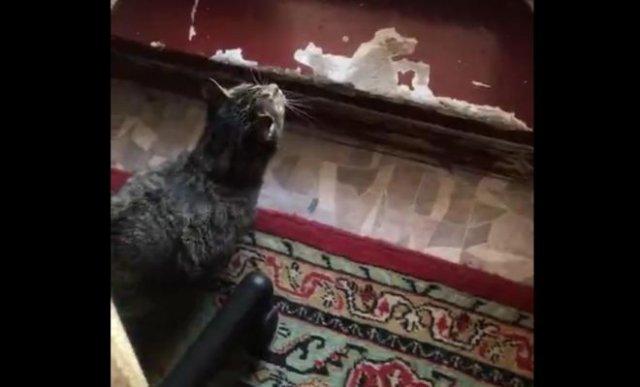 Кот сломался