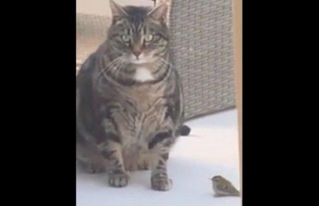 кот прибавил птичку