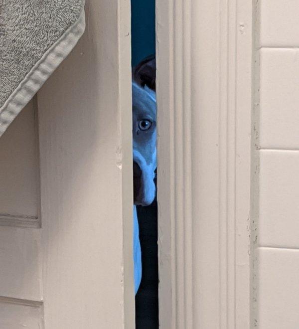 Кажется мой пес планирует убить меня