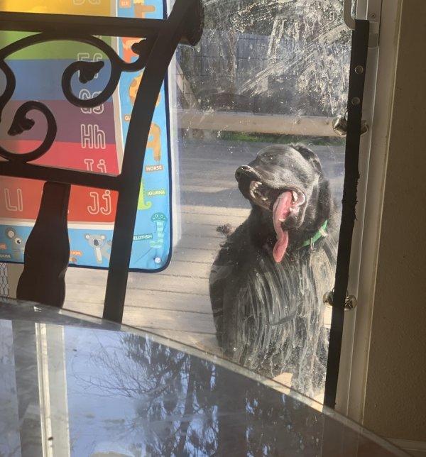 Он делает так каждый раз, когда хочет выйти или войти