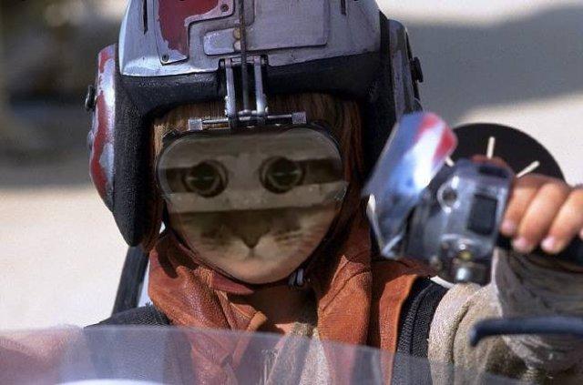 Кот просто посмотрел в камеру через отверстия и сразу же стал героем мемов