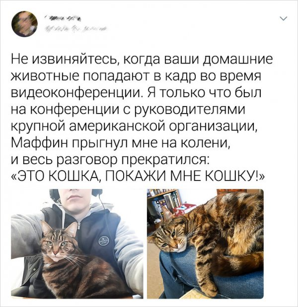 Всем нужны кошки